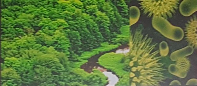 Organisation-Teal-complexité-de-la-forêt