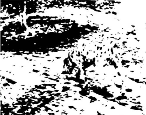 Dalmatien flou