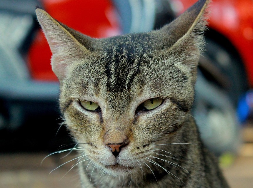 chat-en-colere